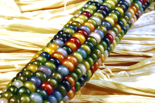 Glass gem sweet corn 2